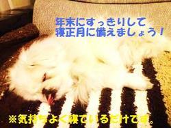 20110106_2125044.jpg